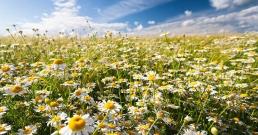 7 холистични билки за естествено лечение на астма