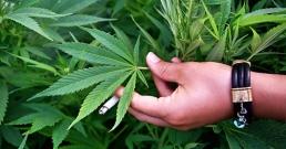 7 причини да гледате на марихуаната като лекарство