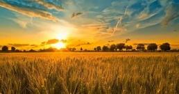 Хелиотерапия или как слънчевата светлина лекува