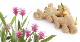 Отглеждайте си свой собствен джинджифил безплатно: природна медицина, която е и вкусна!