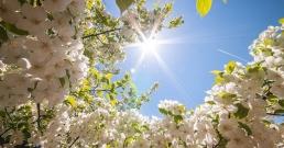 http://doctiming.bg/blog/пролетно-здраве-ползите-от-копривата-спанака-дивия-чесън-и-киселеца