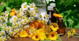 Как да консумирате безопасно тези 13 ядливи цветя