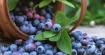 Най-добрите суперхрани, които да ядем, за да засилим имунната система