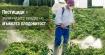 Пестициди в зеленчуците вредят на мъжката плодовитост