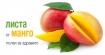 Изключителните ползи за здравето от листата на манго