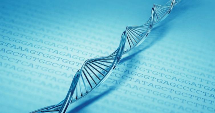 Учените потвърдиха: думите влияят на структурата и молекулите на ДНК